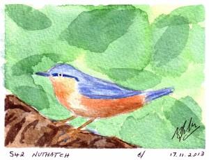 542 NUTHATCH