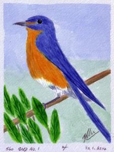 560 BIRD NO. 1