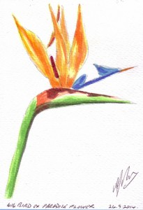 616 BIRD OF PARADISE FLOWER