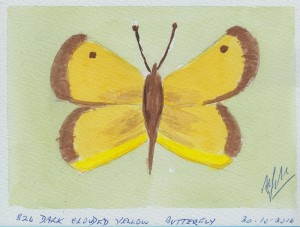 836 DARK CLOUDED YELLOW BUTTERFLY