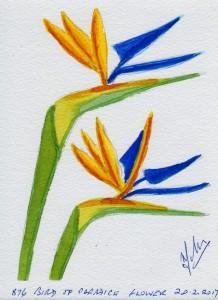 876 BIRD OF PARADICE FLOWER